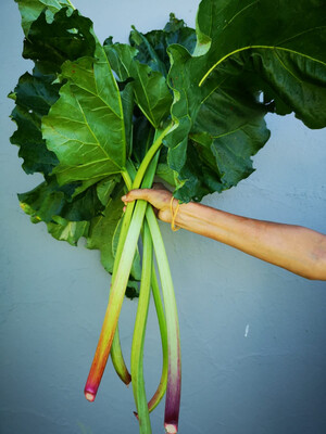 Rhubarb (Organic)