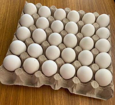 Free Range Eggs (30)