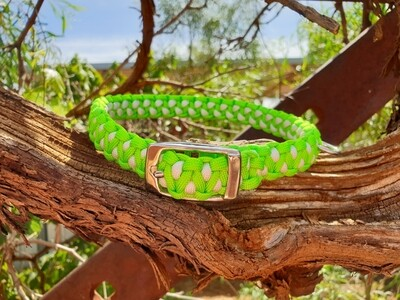 Lime and white medium drakon collar