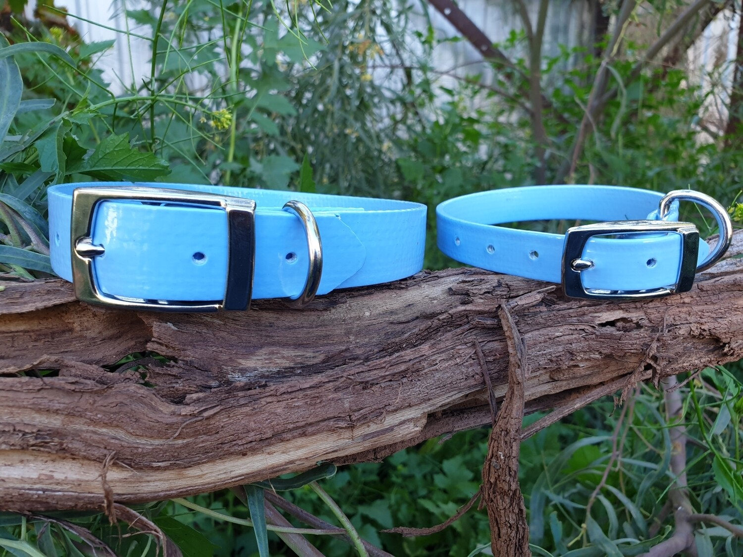 Light Blue PVC collar.