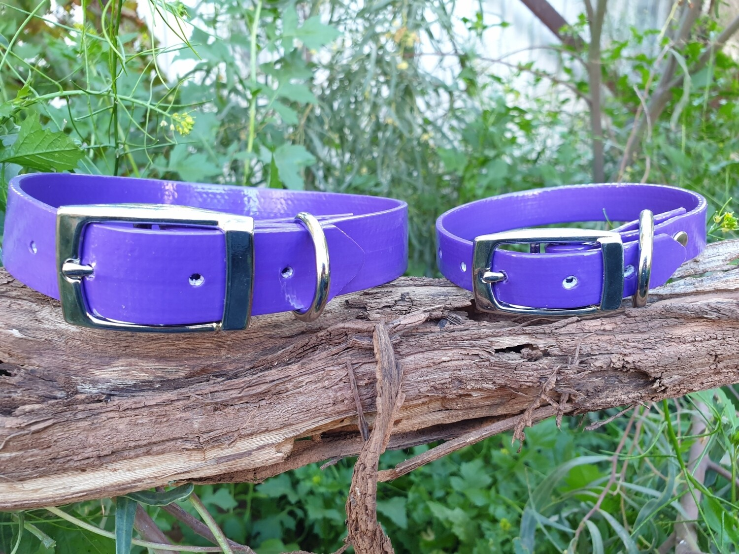 Purple PVC collar.