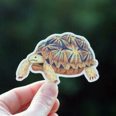 Cactus Club Tortoise Sticker