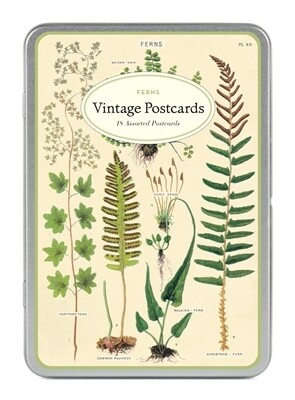 Cavallini Vintage Postcards Ferns