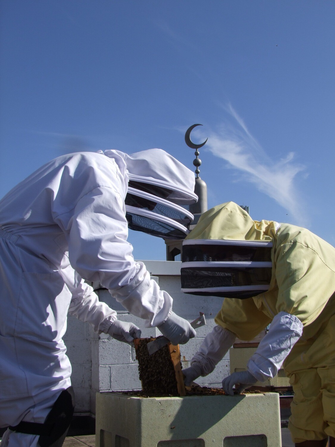 Beekeeping Course - 2 Weekends (4 x AM Sessions) 9.30am - 12.30pm