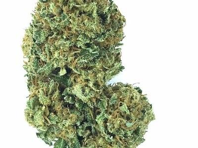 CHEESE Marijuana Flowers BULK WHOLESALE