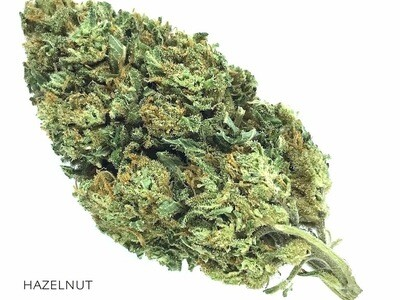 Hazelnut CBD rich Marijuana Flowers