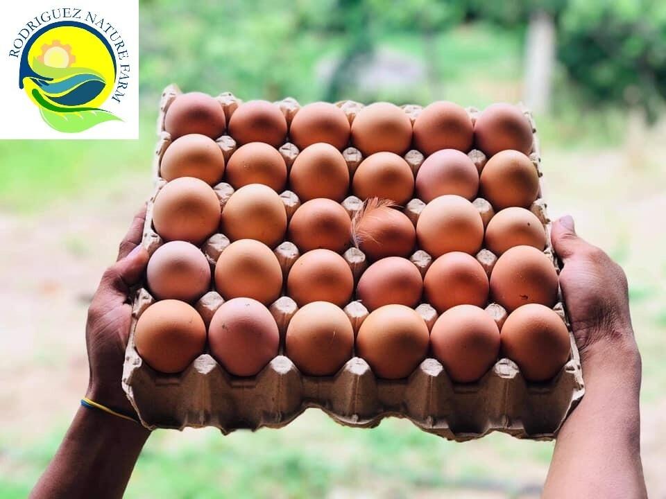 Free Range BROWN EGGS 1 TRAY - 30 eggs