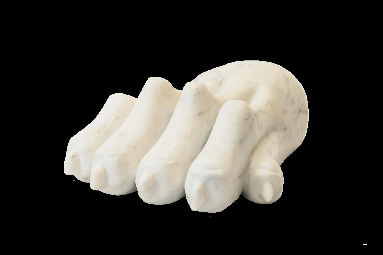 White Lion Paw