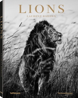 Lions by Laurent Baheux