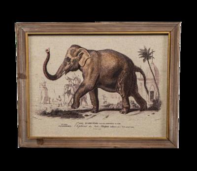 Elephant Print - A