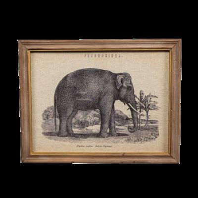 Elephant Print - B