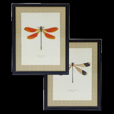 Dragonflies Wall Art