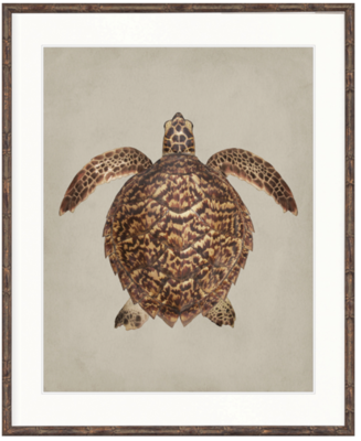 Majestic Turtle Framed Artwork