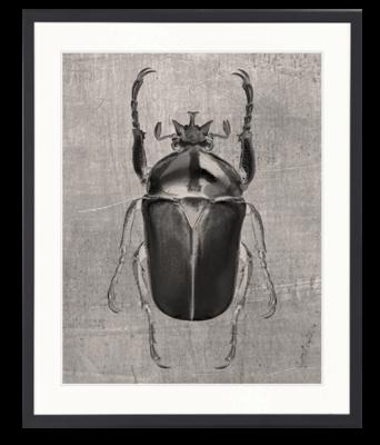 Beetle Artwork