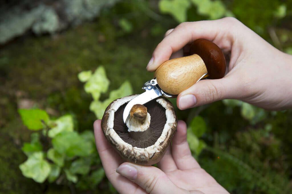 Mushroom Tool Keychain /CD146