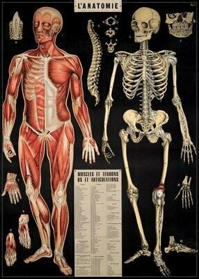 L' Anatomie ANA /#24
