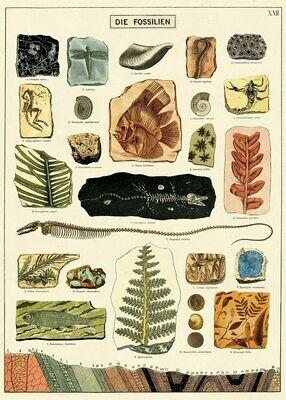 Fossils Chart /#45