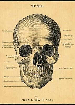 The Skull /#23
