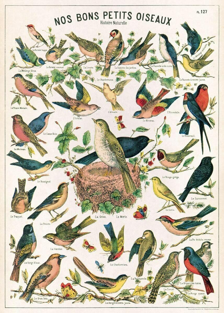Bird Chart-Brdcht /#36