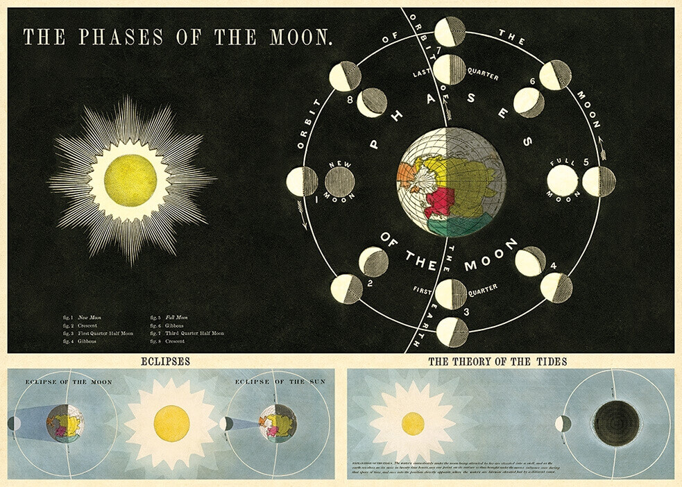 Phases of the Moon-Moon /#35