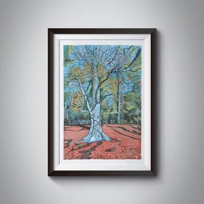 Falling Foss Beech Tree A3