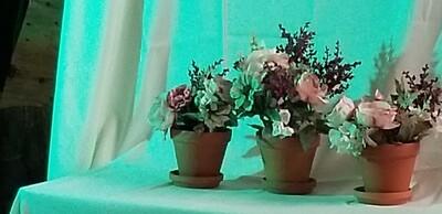 Spring floral pots