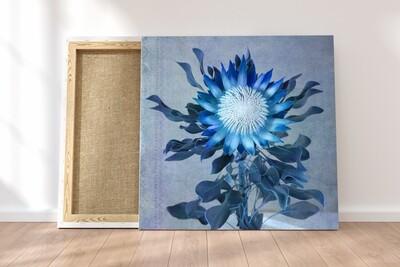 Madiba Protea 2 on canvas