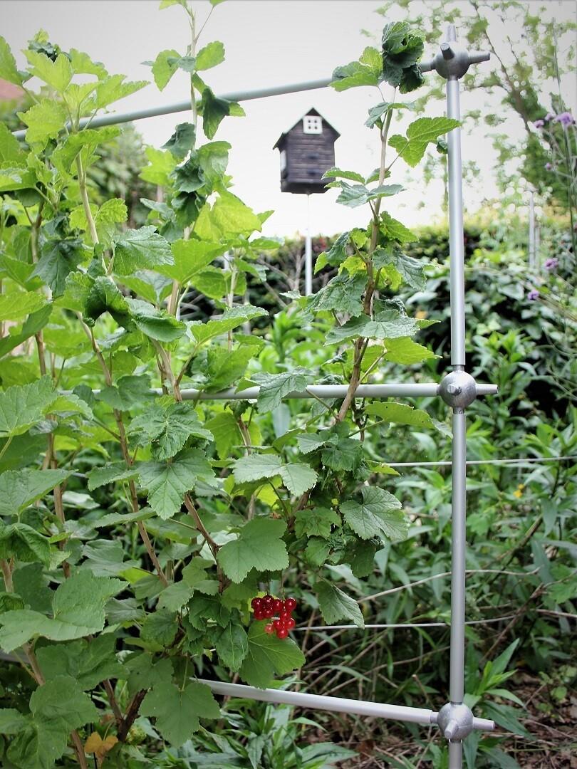 Uitbreidbare trellis leisteun voor kleinfruit | L 107 x H 157 cm