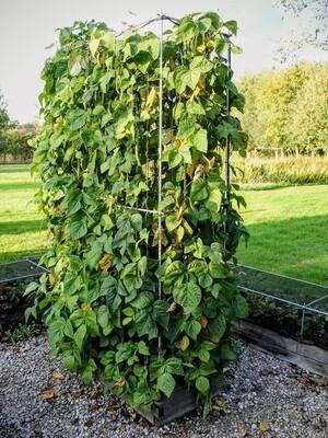 Uitbreidbare kolomsteun L voor klimplanten | L 107 x B 57 x H 207 cm