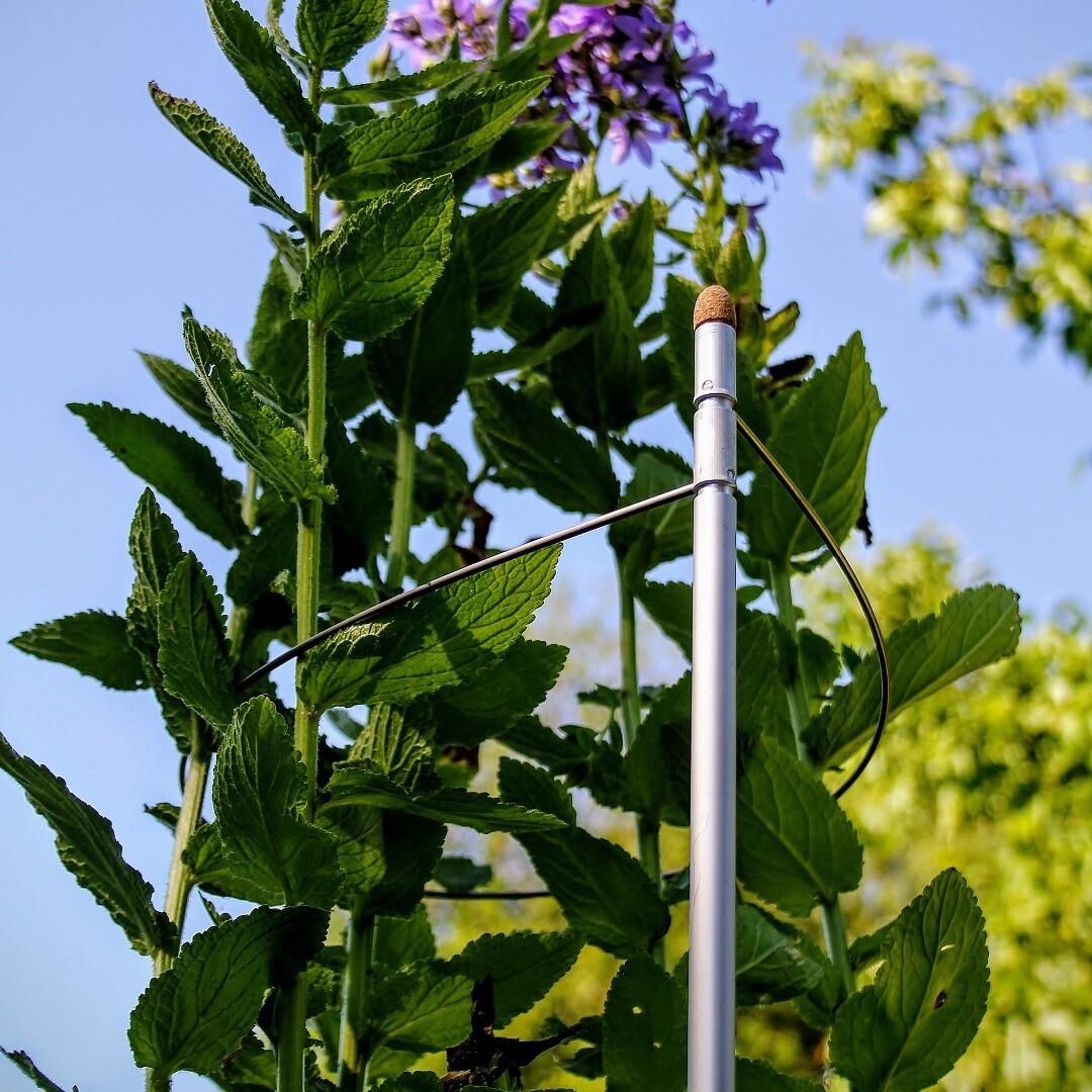 2 veelzijdige 3-in-1 plantensteunen | L 100 cm