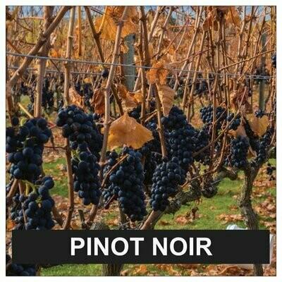 Proefpakket Pinot Noir