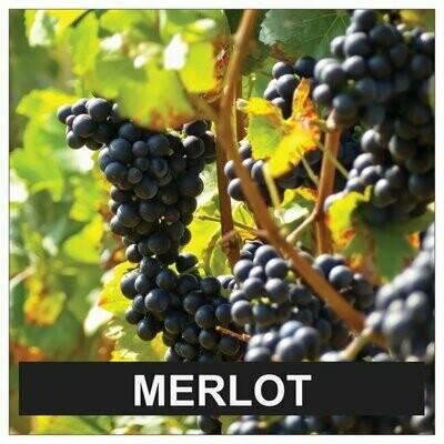 Proefpakket Merlot