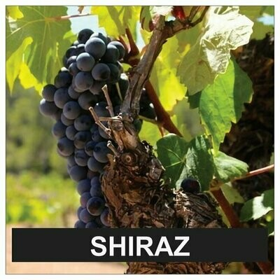 Proefpakket Shiraz