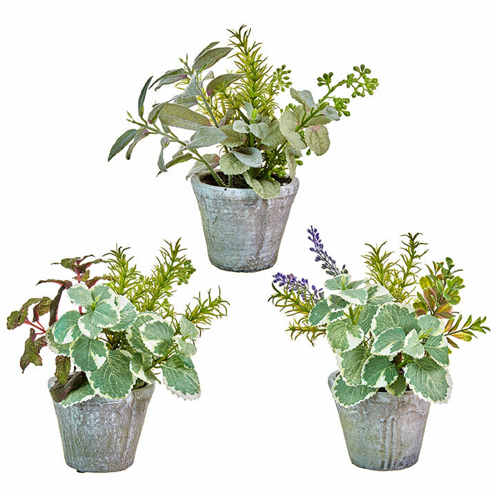 Floral Potted Herb 9.75""