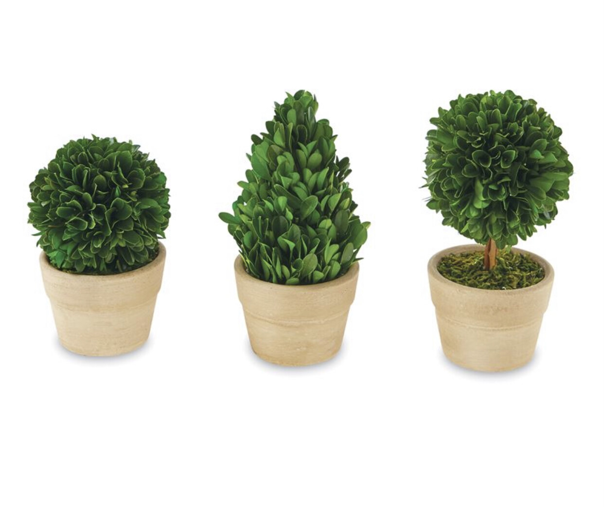 Boxwood Small Topiary Set (3)