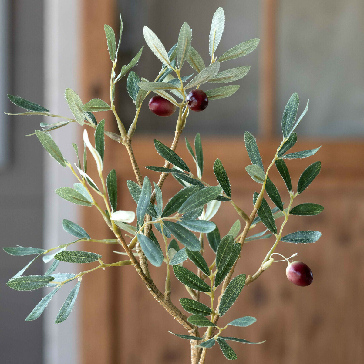 Topiary Olive Potted