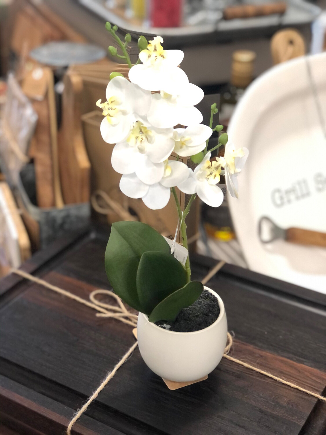 Potted Orchid Small