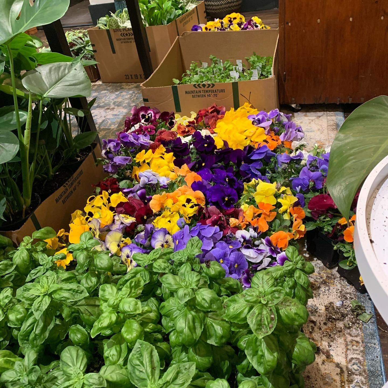 Full Sun Outdoor Plants Online Shop
