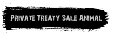 Private Treaty Sale Animal - Not in Show