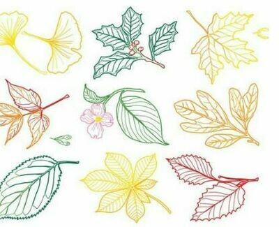 Leaf Rubbing Plates