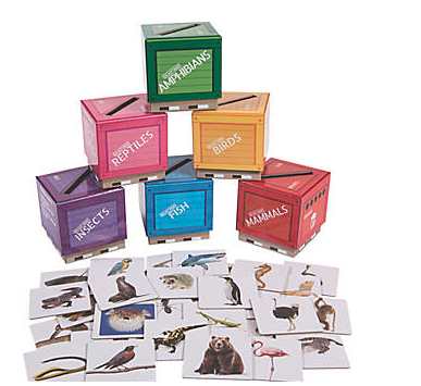 Animal Classifications Sorting Boxees