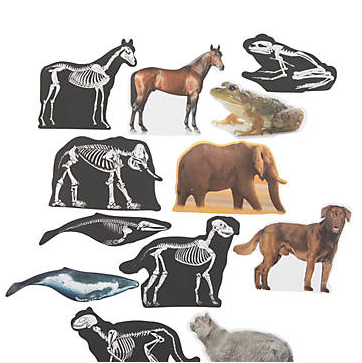 Animal Skeletons Scratch 'N Reveal Activities-24Pk