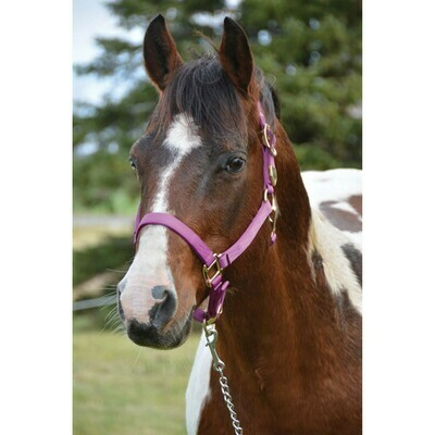 """WRH Signature Classic Halter with Snap 1"""""""