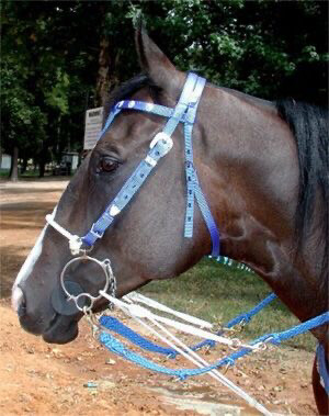 Josey Pro Training Rein with Martingale