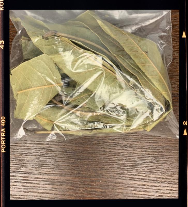 Organic Mango leaves
