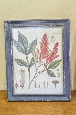 Cadre botanique en bois