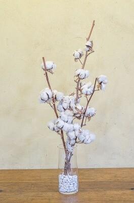 Coton branches en vase verre droit