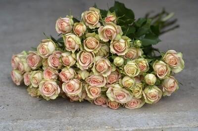 Brassée de Roses branchues - couleurs variables selon les semaines
