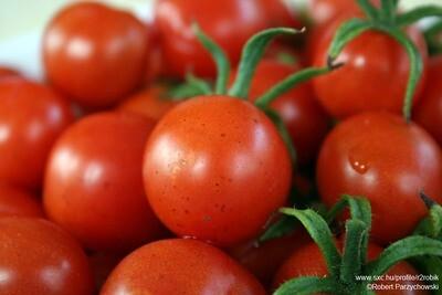 Salad Tomatoes (6)