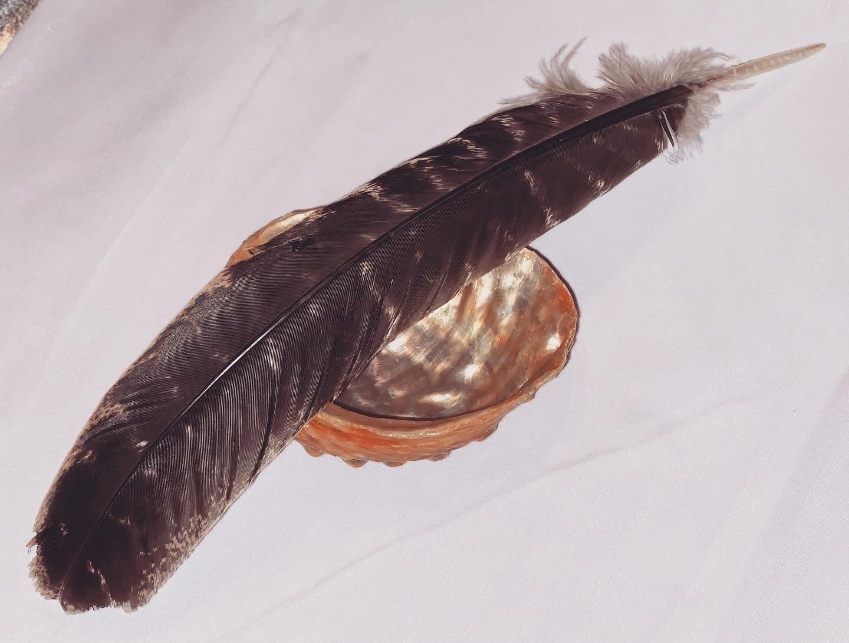 Abalone Shell & Turkey Feather Bundle (CLOSE OUT SALE)